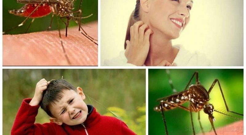 Шишка после укуса комара