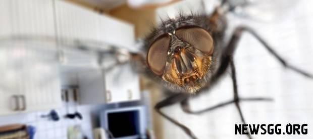 Откуда мухи в квартире