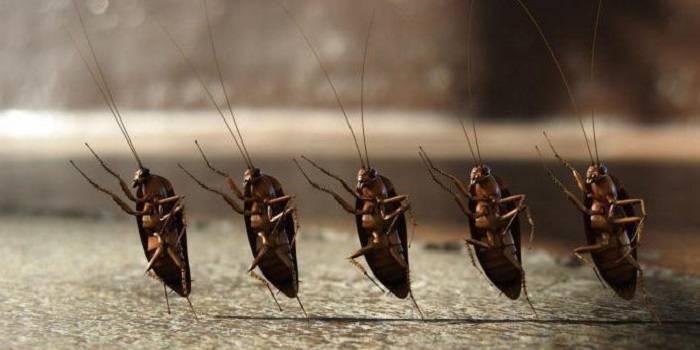 Убить тараканов в квартире