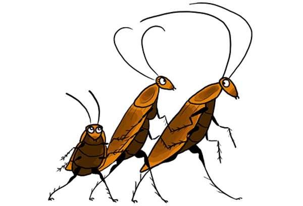 Какашки тараканов