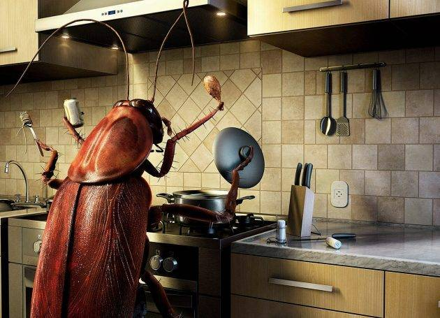 Самый эффективный способ избавиться от тараканов