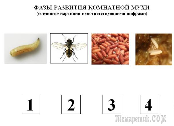 Почему дохнут мухи в квартире