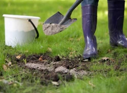 Народные средства от муравьев в огороде