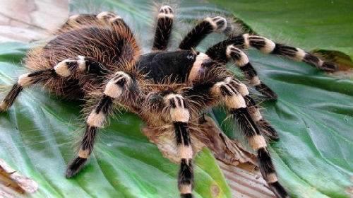 Приснились пауки к чему это