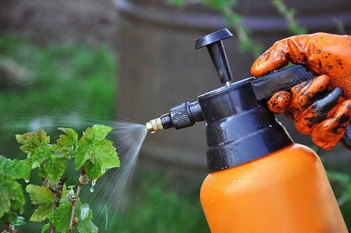 Как избавиться от муравьев домашними средствами