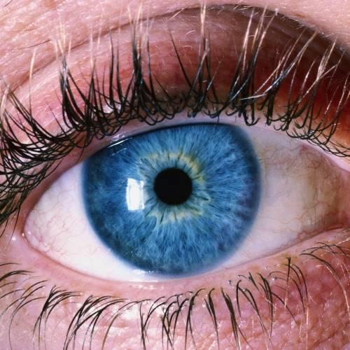 Клещи в глазах человека