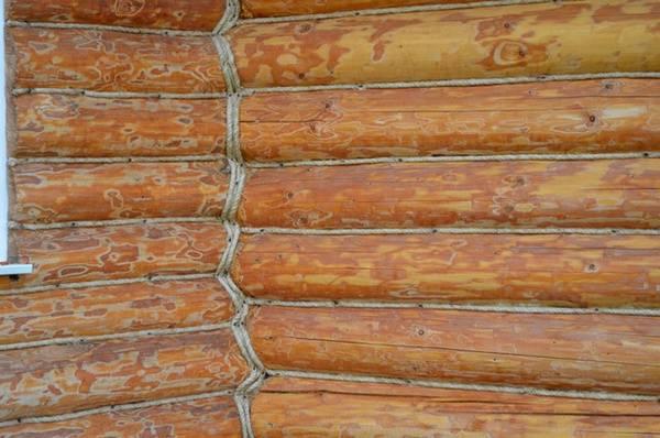 Как уничтожить короеда в деревянных конструкциях