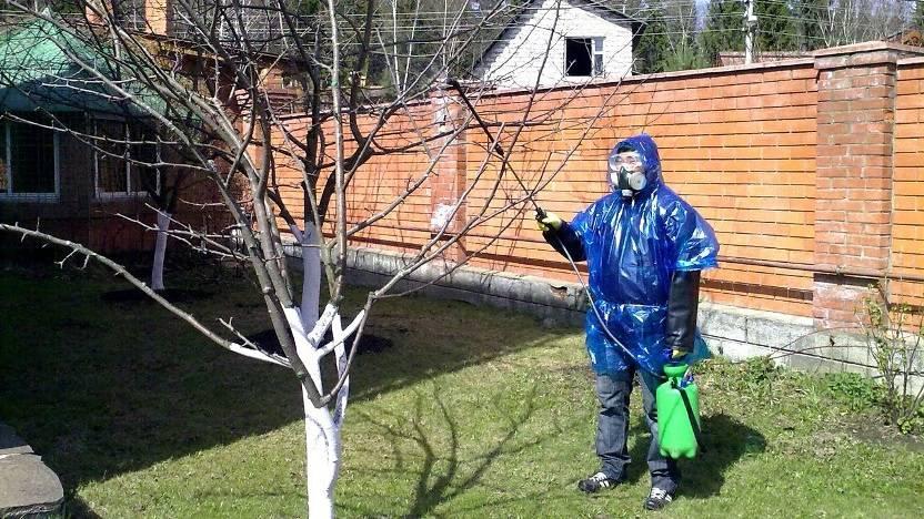 Как бороться с тлей на яблонях