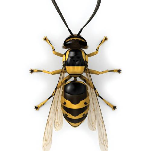 Укус осы что делать в домашних условиях