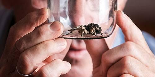 К чему снятся пауки девушке