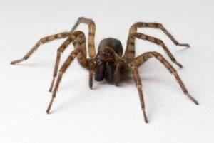 Увидеть паука примета утром в ванной