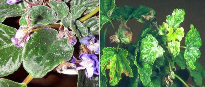 Средство от тли на комнатных цветах