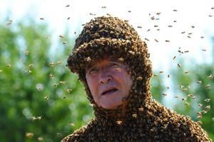 Лечение пчелами вред и польза