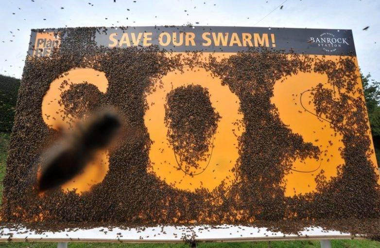 Почему исчезают пчелы на планете