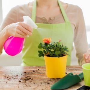 Как избавиться от тли в домашних условиях