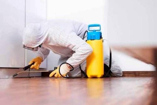 Как избавиться в квартире от двухвосток