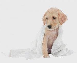 Шампунь для щенков от блох