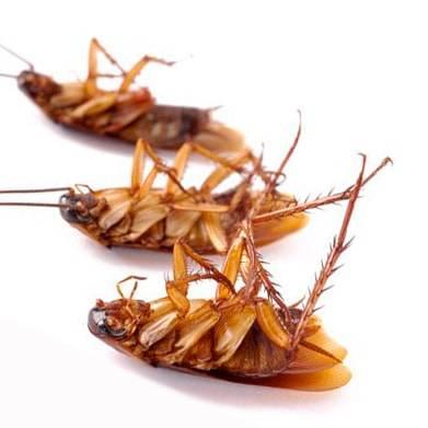 Exil от тараканов
