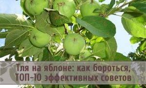 Тля на яблоне как бороться народными средствами