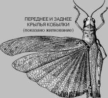Сколько у насекомых лап