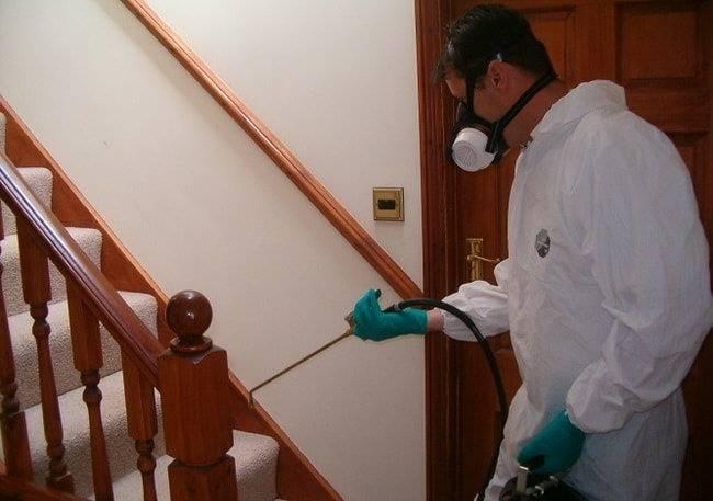 Служба по уничтожению клопов в квартире