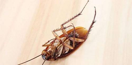 Какая польза от тараканов