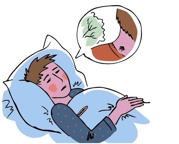 Инкубационный период после укуса клеща у человека