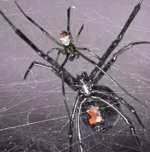 К чему снятся пауки во сне