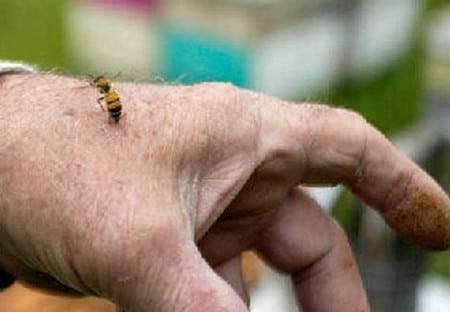 Как избавиться от диких пчел в доме