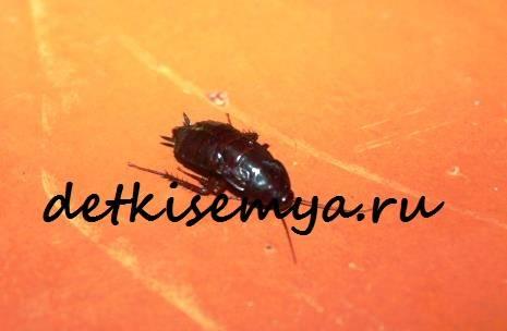 Посоветуйте средство от тараканов