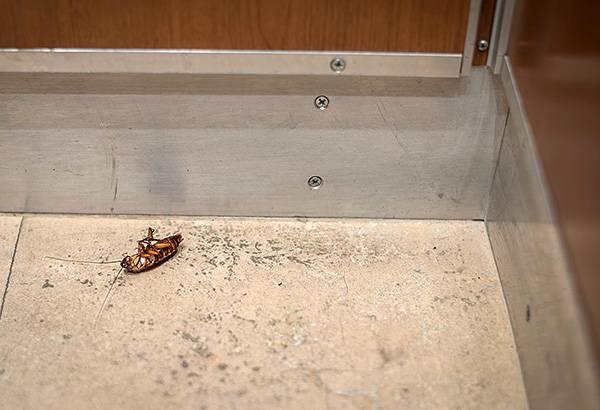 Для повышения эффективности борьбы с тараканами важно уметь правильно комбинировать средства разных типов.