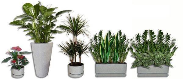 Как вывести тлю с комнатных растений