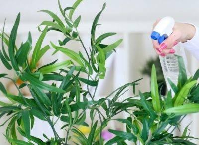 Паутинистый клещ на комнатных растениях