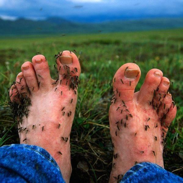 Как избавиться от комаров дома