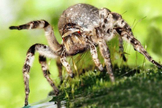 Опасные насекомые краснодарского края