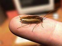 Маленькие насекомые в квартире