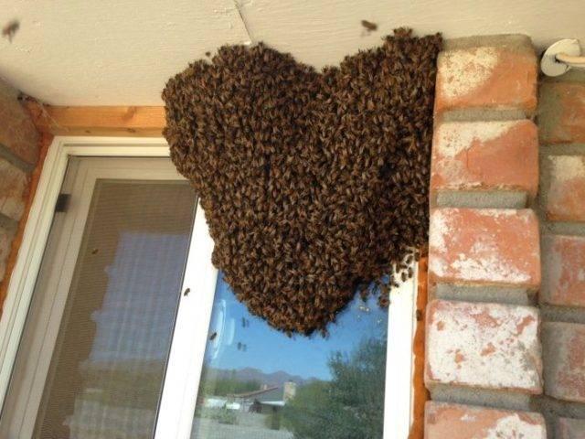 Древесные пчелы как избавиться в домашних условиях