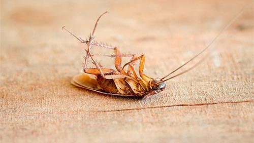 Раптор дымовая шашка от тараканов