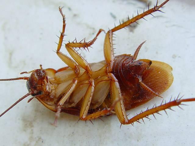 Что делать если дома тараканы