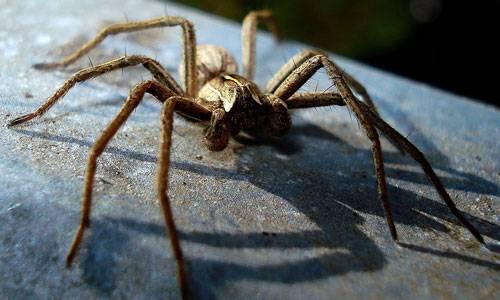 Во сне приснился паук