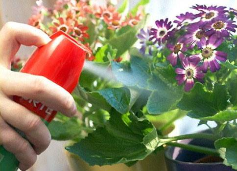 Клещ на домашних цветах как избавиться