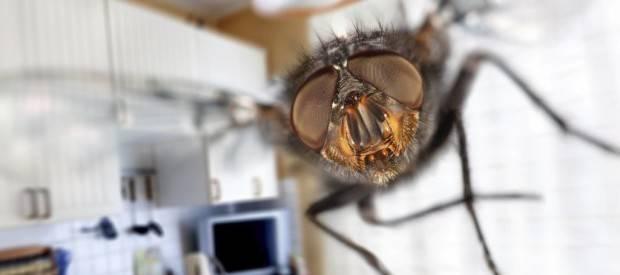 В квартире появились мухи