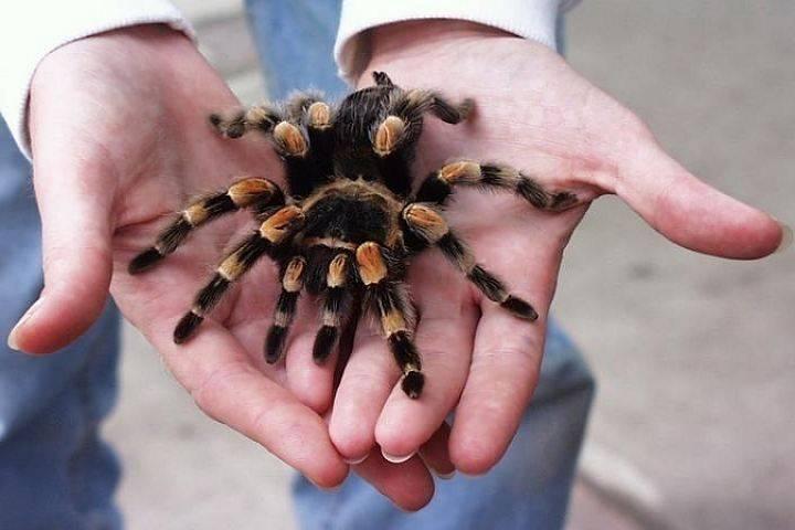 К чему ползает паук по человеку