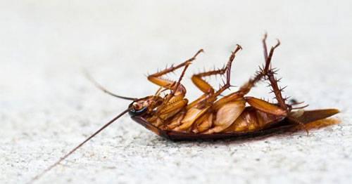 Средство от тараканов великий воин