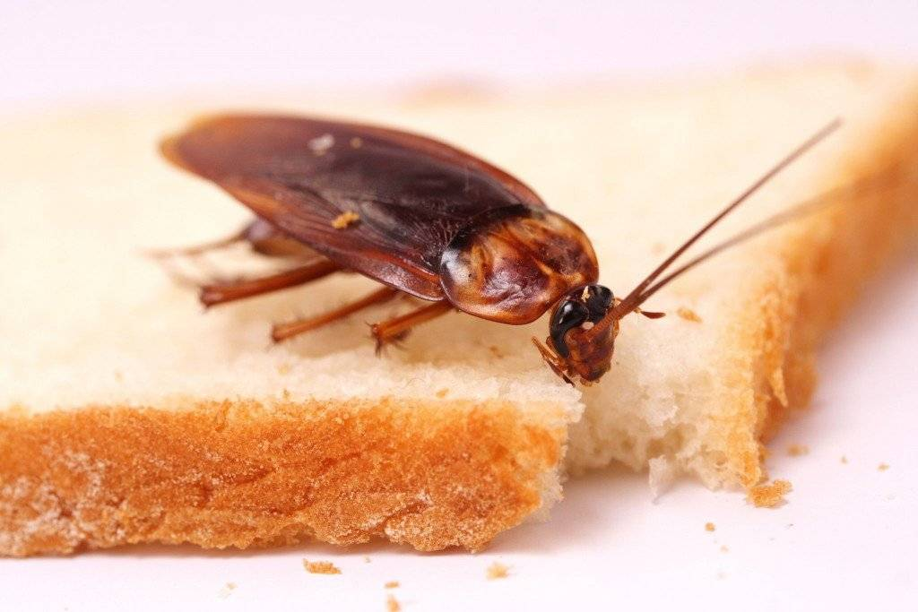 Где водятся тараканы
