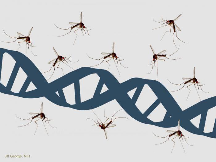 Какой цвет привлекает комаров