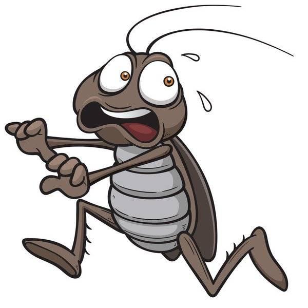 Чем питаются тараканы в квартире