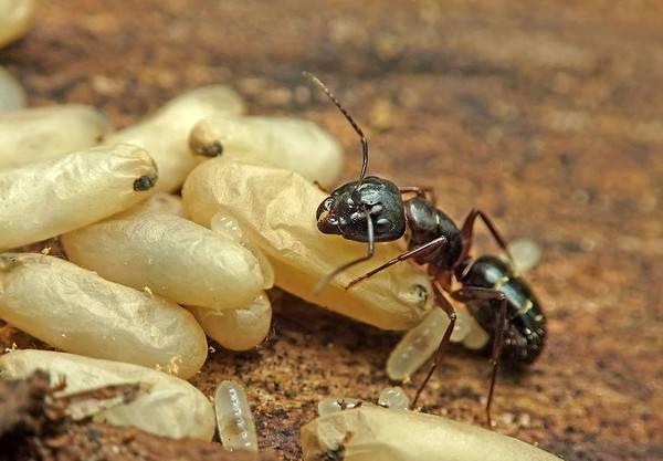 Жизнь муравья