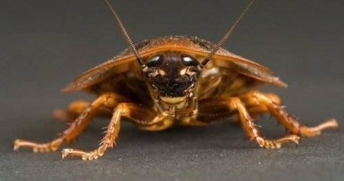 Почему в доме появляются тараканы