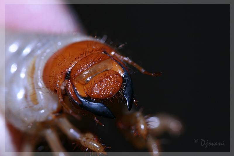 Как отличить клеща от паука